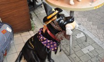 07_japan_is_a_fashionable_place_for_dogs_-_a_halloween_outfit.jpg